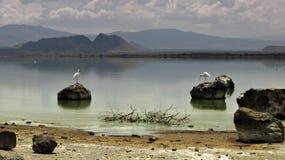 Planeta Elementaita dos pássaros fotografia de stock royalty free