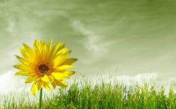 Planeta verde Imagem de Stock