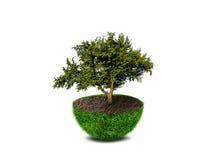 Planeta verde abstrato com uma grande árvore Fotos de Stock