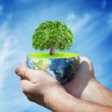 Planeten-Erde mit Baum in den menschlichen Händen gegen blauen Himmel stockfoto