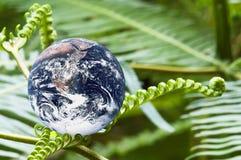 Planeten-Erde withs grüne Farne Stockbild
