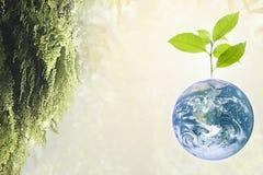 Planetjord med det härliga friskhettillväxtträdet Arkivfoton