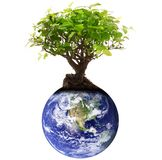 Planetjord med trädet på vit bakgrund Royaltyfria Bilder