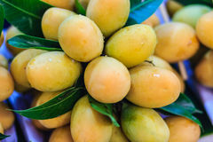Plango frukt eller Marian Plum, berömd tropisk frukt i Thailand f Royaltyfri Bild