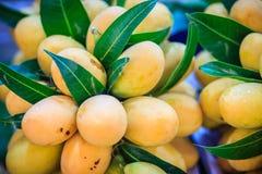 Plango frukt eller Marian Plum, berömd tropisk frukt i Thailand f Royaltyfri Foto