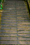 Plank of moss. Wooden path way in the forest Royalty Free Stock Photos