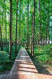 The plank path stock images