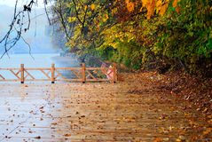 Plank road. A plank road beside the lake Royalty Free Stock Photos
