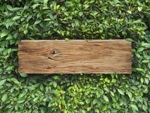 Plank wood on Korean Banyan tree leaves background Stock Photos