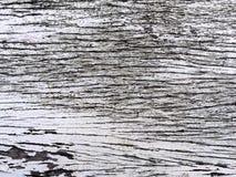 Planka för trädskäll Royaltyfria Foton