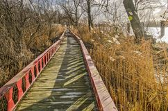 Plankbridge on a tidal floodplain. Elevated footpath made of steel beams and wooden planks in between reeds, trees and bushes on a tidel floodplain of the river royalty free stock image