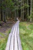 Planked足迹通过厚实的森林 库存图片
