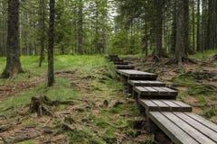 Planked足迹通过厚实的森林 图库摄影