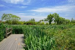 Planked footpath in grass at sunny summer noon. Chengdu,China stock image