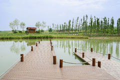 Planked footpath in lake on sunny summer day Stock Images