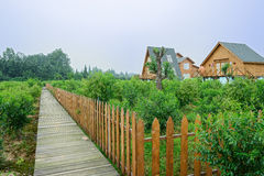 Planked footpath outsdie Eruopean-style cabins in fenced orchard Royalty Free Stock Image