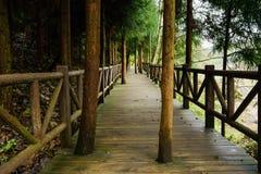 Planked footway med balustrader i skuggiga trän fotografering för bildbyråer