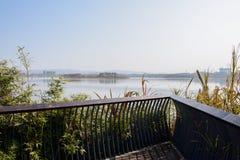 Planked och fäktad plattform i lakesideväxter på solig dag arkivbild
