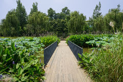 Planked path in aquatic plants on sunny summer day Stock Photography