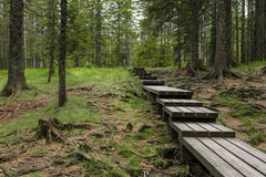 Planked slinga till och med tjock skog Arkivbild