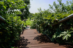 Planked stairway in trees and plants on sunny summer day Royalty Free Stock Image