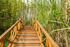 Planked stairway in verdant spring plants Royalty Free Stock Image