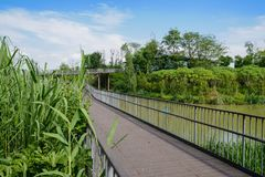 Planked steel footbridge with railings over water in sunny summe. Planked steel footbridge with railings over the water in sunny summer afternoon,Chengdu,China Royalty Free Stock Photos