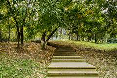 Planked steps along slope in verdant plants Stock Photos
