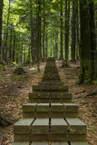 Planked trail through thick forest Royalty Free Stock Image