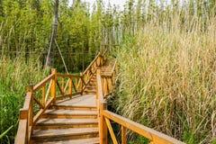 Planked trappa i bambu och vasser på solig vårdag Arkivbild