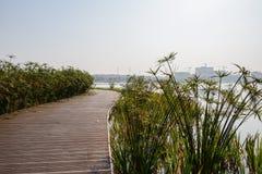 Plankedweg over meer in aquatisch gras van zonnige de winterafternoo royalty-vrije stock foto
