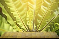 Planken van steen en mooi groen blad worden gemaakt dat Royalty-vrije Stock Afbeeldingen