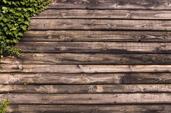 Planks background with ivy Royalty Free Stock Photos