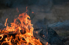 Planks burning in bonfire. An outdoor campfire close-up Royalty Free Stock Photos