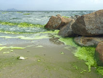 Plankton bloom in the sea Stock Images