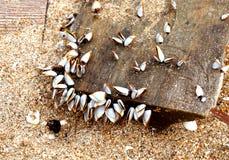 Plankton på gammal timmer Fotografering för Bildbyråer