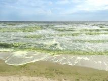 Planktonblom i havet Royaltyfri Fotografi