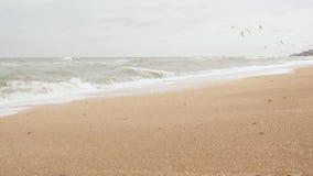 planlägg stil för seascape för seagulls för den gammala vykortet för grunge retro stock video