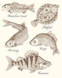 Planlägg uppsättningen med den olika fisken, grafiska teckningar Royaltyfria Bilder