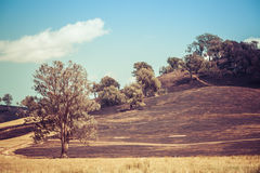 Planned burn in Australian countryside Stock Image