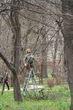 Planned pruning of trees in spring botanical garden `Aptekarsky garden` in Moscow. Moscow, Russia - April 18 2016: Planned pruning of trees in spring botanical Royalty Free Stock Photo