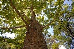Plano-árvore imagem de stock