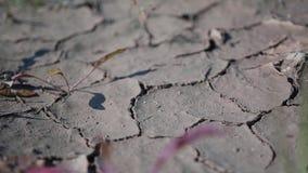 Plano bonito mesmo da terra seca e plantas pequenas que fazem sua maneira com ele video estoque
