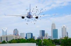 Plano do avião de passageiros do avião de passagem com os pássaros na frente dele durante a descolagem fotos de stock royalty free