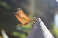 Plano för Aguacil en-abc-bok listo volar para Fotografering för Bildbyråer
