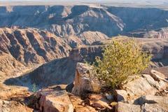 Plano pequeno do deserto contra a garganta fotos de stock