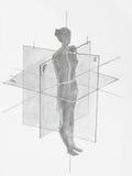 Planos anatômicos das mulheres Imagem de Stock