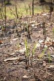 Planos crescentes na terra queimada Fotos de Stock Royalty Free