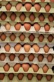 Planos de huevos Fotografía de archivo