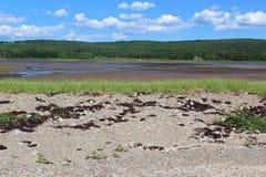 Planos fangosos de la sal en un pantano por la costa en la Isla de Cabo Bretón en el verano 2 fotografía de archivo libre de regalías